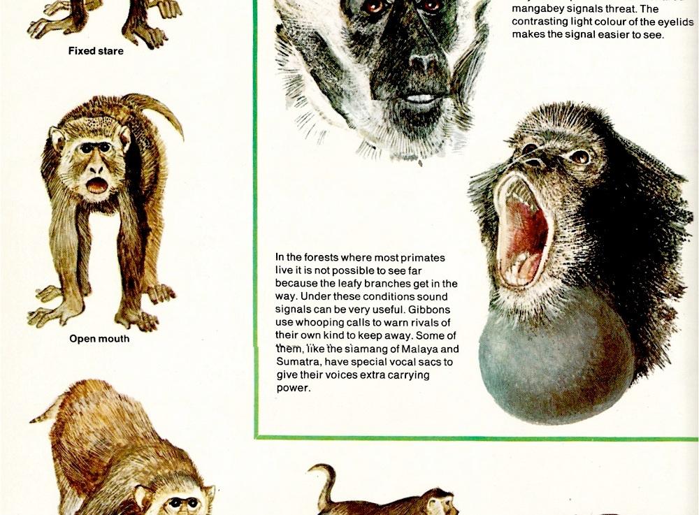 Macaque threat