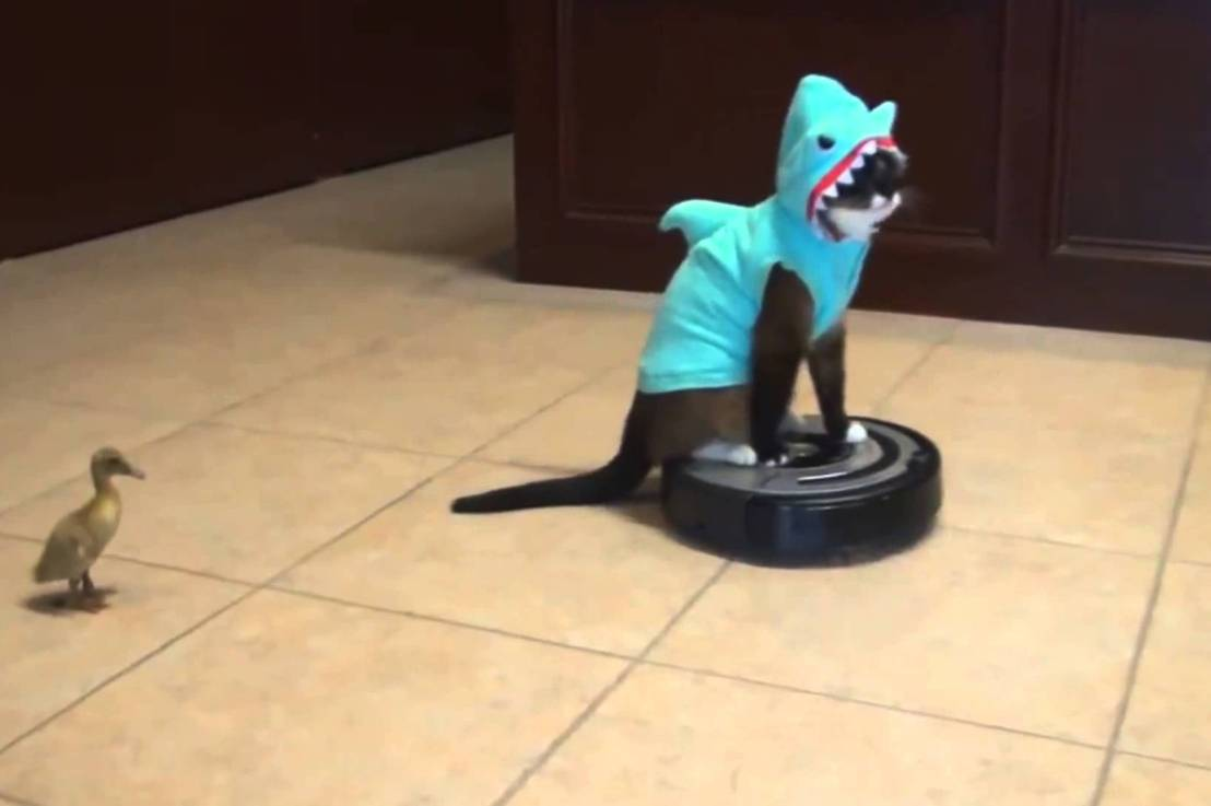 YOU WON'T BELIEVE THESE TEN AMAZING VIRAL ARTS COUNCIL KITTEN VIDEOS