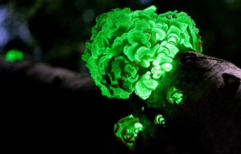bioluminescence-fungus-mushrooms-640x410
