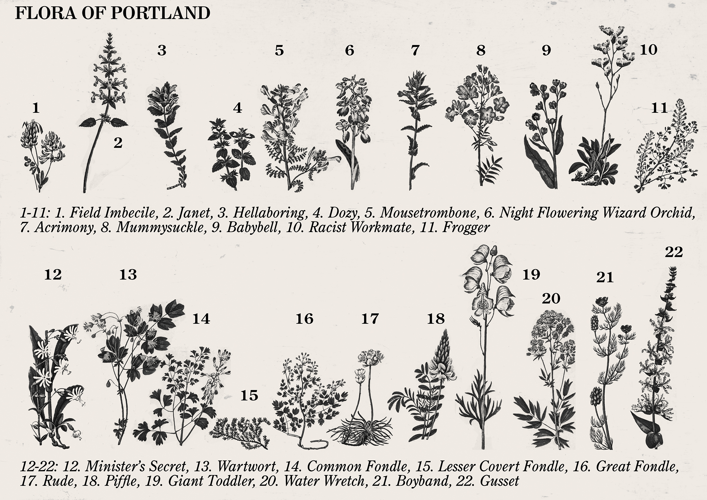 "A print called ""Flora of Portland"" showing drawings of many plants with  fantastical or illogical names."